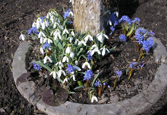 Чтобы была ранняя клумба, цветы надо высаживать уже в феврале / Фото: nflora.kiev.ua
