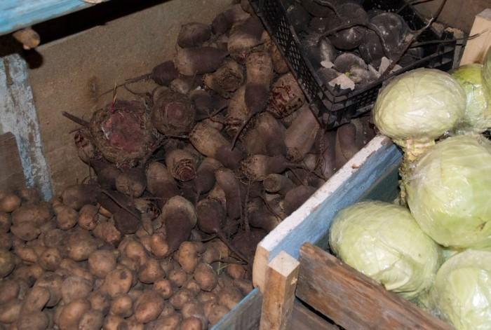 С середины августа мы начинаем заготавливать урожай на осень и зиму