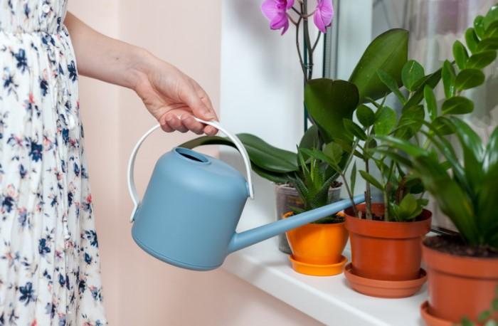 В течение года у растений меняется биологический ритм, поэтому и поливать их нужно по-разному / Фото: azbukaogorodnika.ru