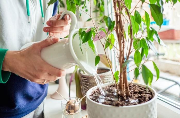 Если неправильно орошать растения, они зачахнут и умрут