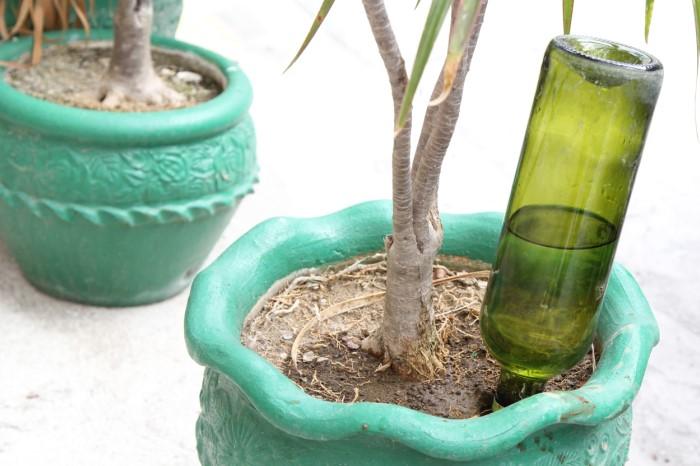 Если вы собираетесь в длительный отпуск или командировку, стоит позаботиться о комнатных растениях