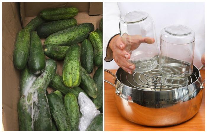 Порченные огурцы или плохая стерилизация могут привести к порче солений