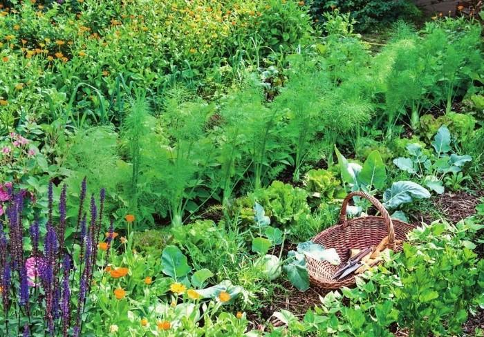 Пряно-цветочное сочетание усиливает рост овощей / Фото: i.pinimg.com