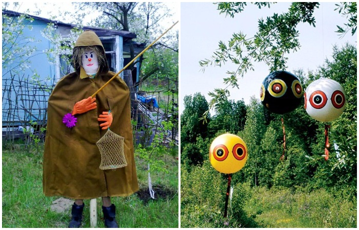 Древнейший лайфхак по отпугиванию птиц - поставить на огороде чучело или сделать имитацию глаз хищников
