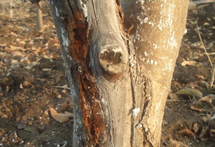 Не оставляйте открытыми раны на деревьях / Фото: eda-land.ru