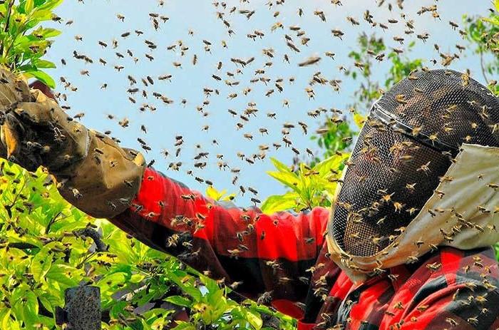 Пчелиный рой / Фото: sad24.ru
