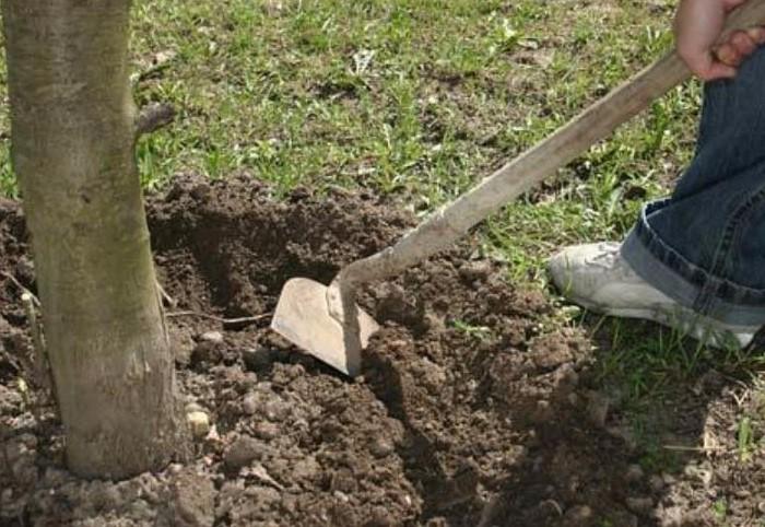 Перекопка или рыхление грунта позволяет улучшить воздухообмен в почве и насытить кислородом корневую систему / Фото: vasha-teplitsa.ru