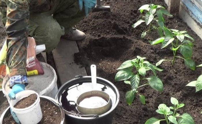Садим и удобряем растения