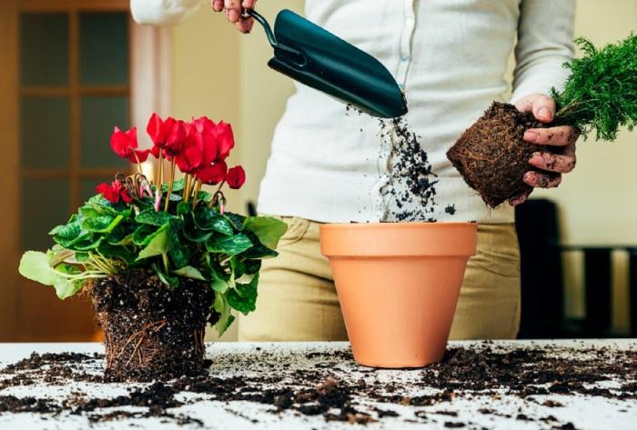 Перед посадкой/пересадкой растений тщательно обрабатывайте грунт и горшок / Фото: women-life.ru