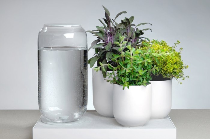 Сгруппируйте растения и расставьте вокруг них емкости, наполненные водой / Фото: i.pinimg.com
