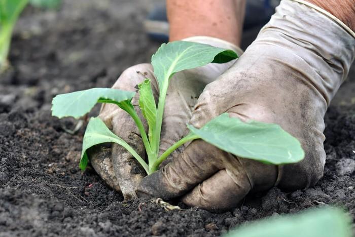 В конце лета можно высадить много культур, которые успеют принести урожай к холодам