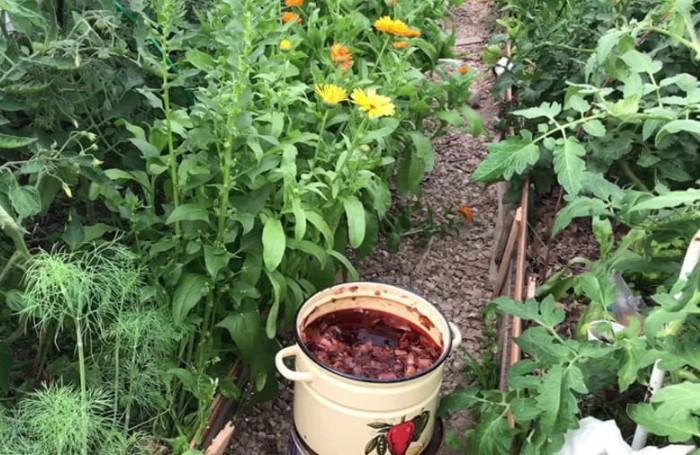 Раствор из шелухи способствует росту растений / Фото: prolife.ru.com