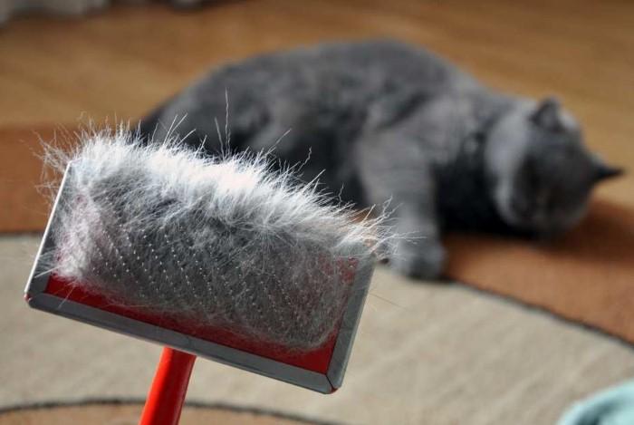 Если проводить регулярную уборку, шерсти будет намного меньше