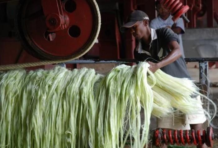 После выжимания сока агавы для текилы, остается большое количество волокнистого материала / Фото: imbuilder.ru