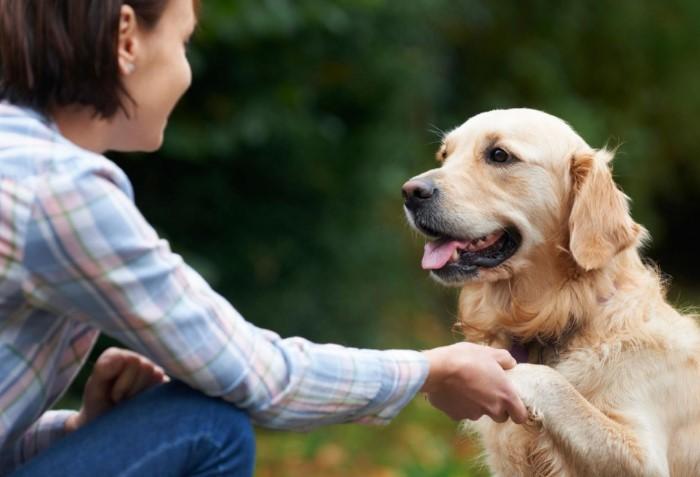 В отличие от семилетнего ребенка, к году жизни собака уже достигает половой зрелости / Фото: familydoctor.ru