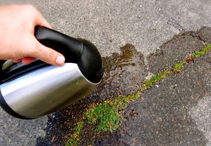 Вскипятите воду и заливайте ею сорную траву, пока она не погибнет  / Фото: elektro-sadovnik.ru
