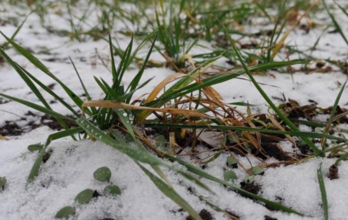 Оставьте землю на зиму максимально чистой, а остатки травы, семян и корневищ погибнут при ближайшем морозе / Фото: glavagronom.ru