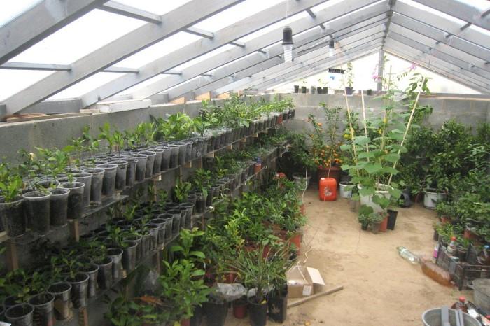 Внутри теплицы круглый год комфортная температура для выращивания овощей / Фото: rmnt.ru