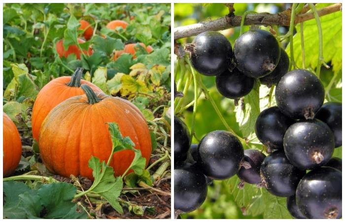 Бахчевые культуры и садовые кустарники - одни из растений, которым подходит яичная подкормка