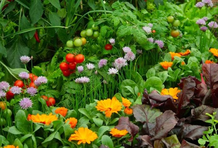 Цветы гармонично сочетаются с овощами / Фото: flo.discus-club.ru