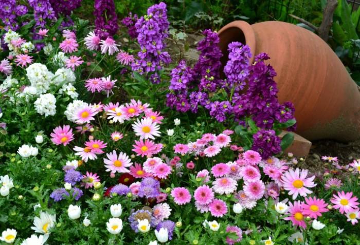 Клумба - украшение сада, поэтому хочется, чтобы она выглядела ярко и привлекательно