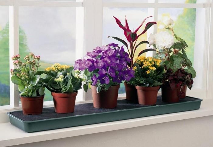 Цветы украсят дом и улучшат микроклимат / Фото: mandarin-shop.ru