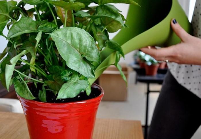 Подкормка из корицы усилит корневую систему и ускорит рост растения / Фото: kotel.guru
