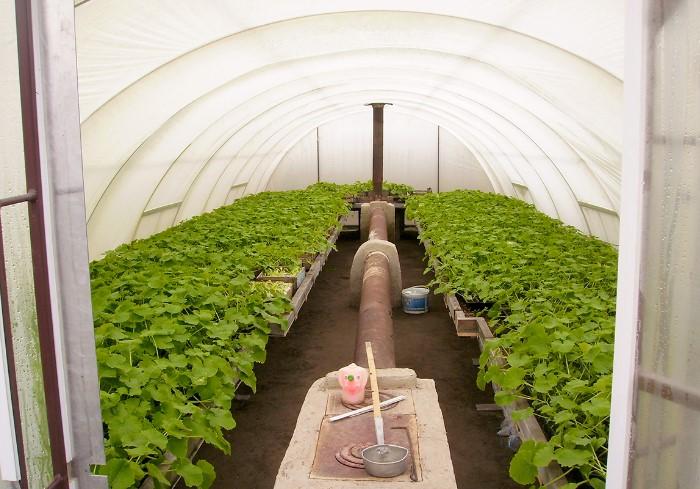 Теплицы-термосы - удобный вариант для выращивания рассады на продажу / Фото: energy-kaskad.com.ua