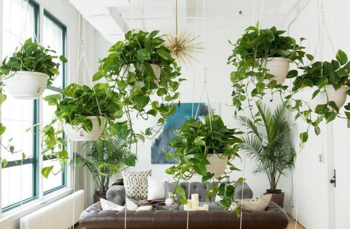 Вьющиеся комнатные растения путают мысли и вызывают сомнения / Фото: i.mycdn.me