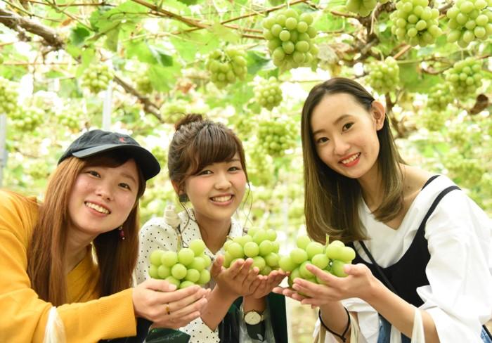 Для нас фрукты - обыденность, а японцы с удовольствием примут такой дар / Фото: japan-harvest.jp