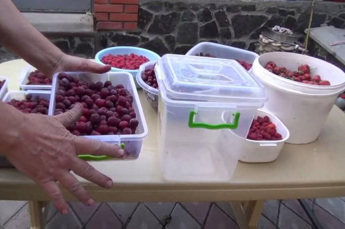 Ягоды удобно хранить в пищевых пластиковых контейнерах или зип-пакетах с застежками / Фото: hot-info.ru