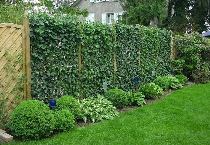 Украсить ограждение можно вьющимися растениями, которые создадут живую изгородь / Фото: mirlandshaft.ru