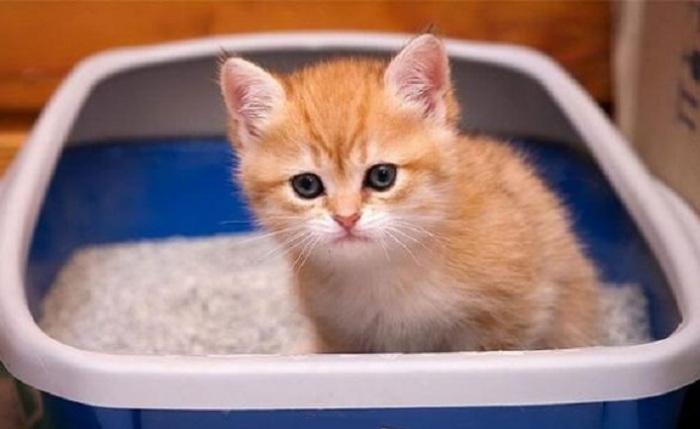 Впитывающий наполнитель для кошачьих лотков - аналог силикагеля / Фото: www.pravda.ru