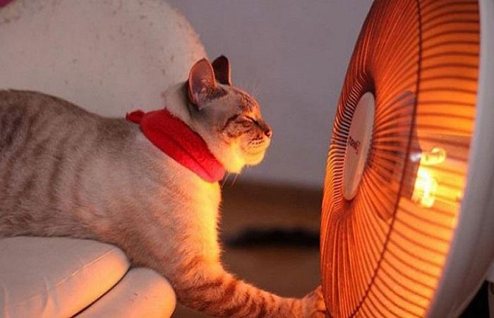 Тепловентилятор быстро нагревает воздух в помещении / Фото: domikelectrica.ru