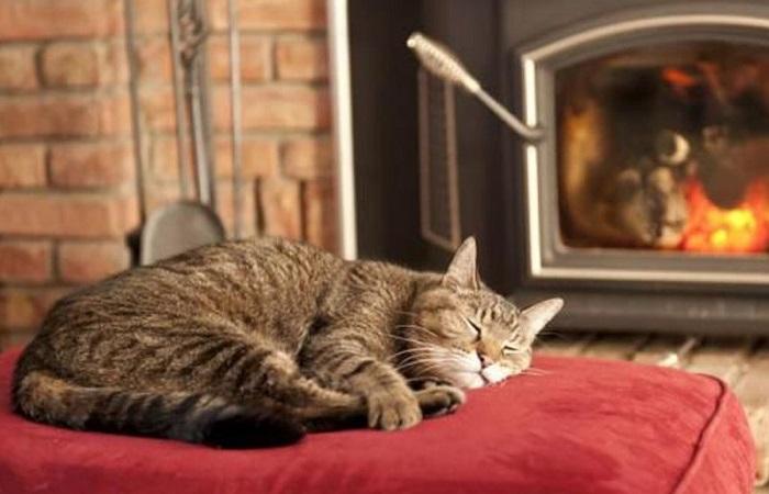 В квартире можно удержать тепло доступными способами / Фото: moydom.moscow