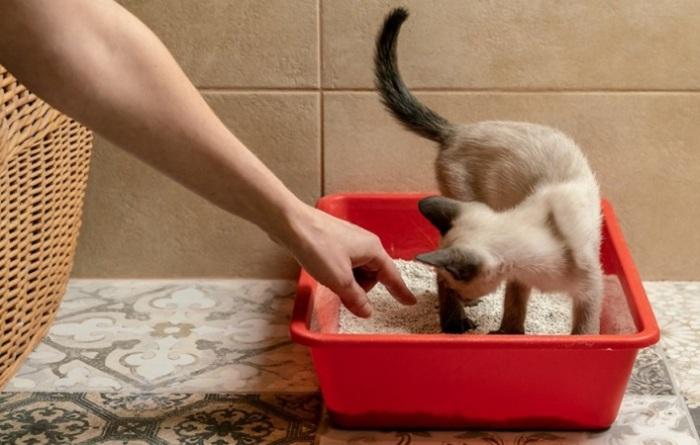 Если в кошачий лоток добавить немного соды, то она впитает в себя неприятный запах / Фото: zdorovee.com