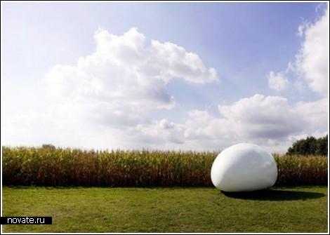 Жить в яйце: неудобно, но оригинально