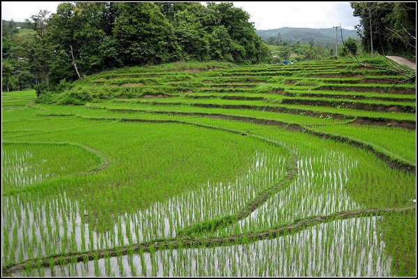 Солнечные электростанции на заброшенных рисовых полях в Японии