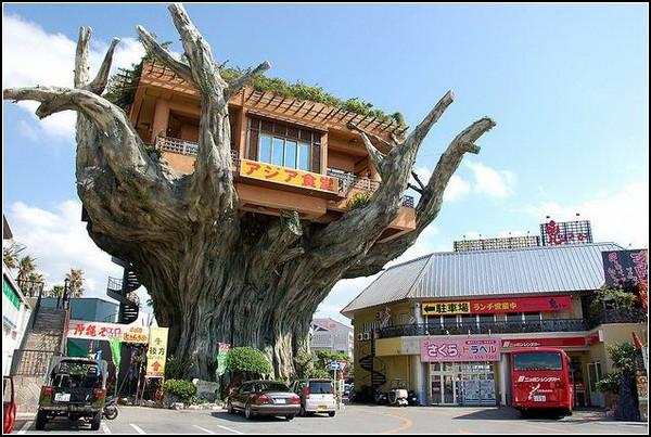 Naha Harbor Diner - ресторан в ветвях баньяна