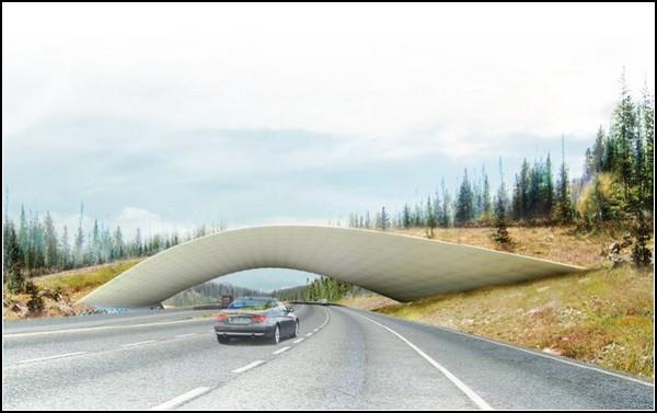Мост для животных