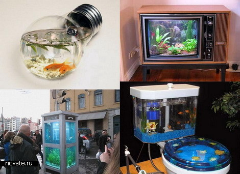 Потому и появляются то и дело необычные аквариумы.  К примеру, этот аквариум-лабиринт...