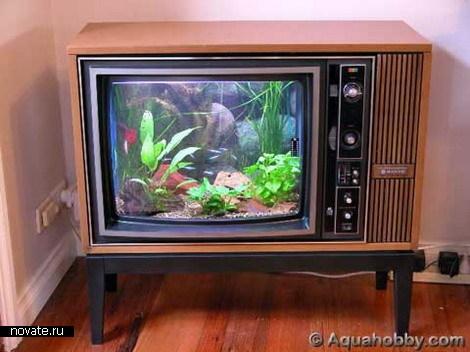 Необычный аквариум