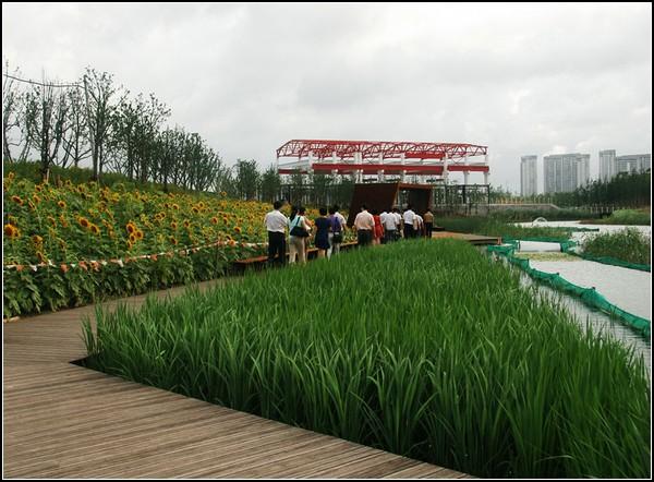 Болотистый парк в Шанхае