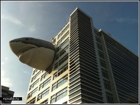 Неделя акул от Discovery