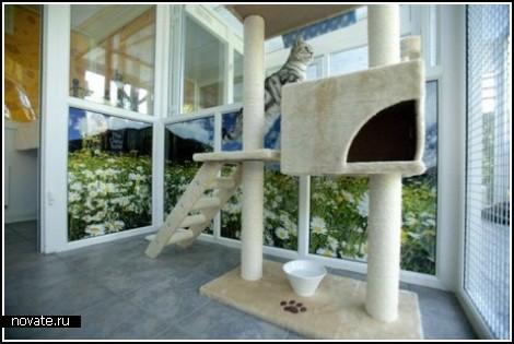 Самая комфортная гостиница для котов