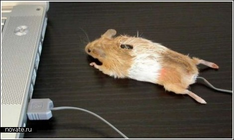 Мышка в форме сиськи