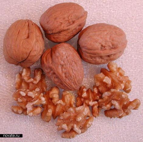 Сила гравитации против грецкого ореха