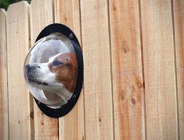 Pet Peek – окно для собачьего взгляда на мир