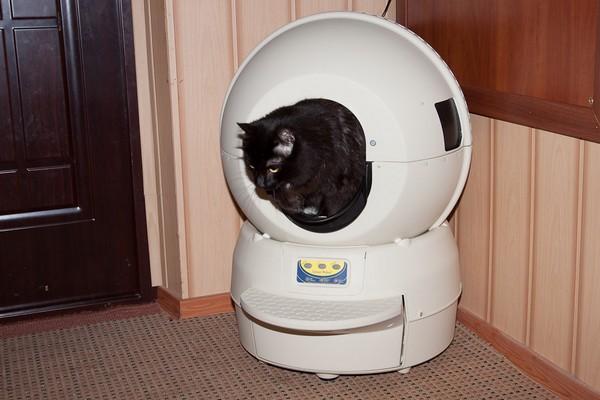 Самоочищающийся кошачий туалет