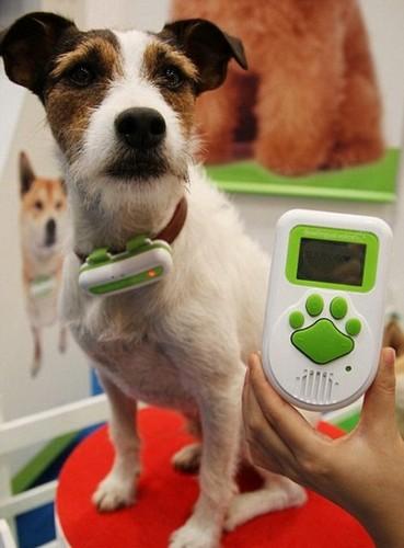 Bowlingual – переводчик с собачьего на человеческий
